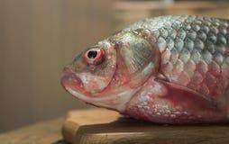 Carpa del pesce crudo su un tagliere della cucina con l'occhi rossi testa posto per l'etichetta Fotografia Stock