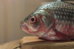 Carpa del pesce crudo su un tagliere della cucina con l'occhi rossi testa posto per l'etichetta Fotografia Stock Libera da Diritti