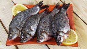 Carpa dos peixes imagem de stock royalty free
