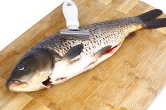 Carpa e uma faca para peixes da limpeza Fotos de Stock Royalty Free