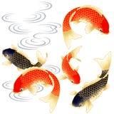 Carpa giapponese Fotografia Stock