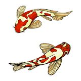 A carpa Koi pesca a ilustração do vetor ilustração royalty free