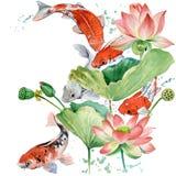 Carpa a specchi dell'acquerello e fiore di loto illustrazione del fondo del pesce dell'acquerello illustrazione di stock