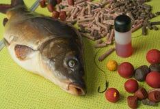 carpa a specchi, esca e punte di pesca sull'tum pieganti Fotografie Stock