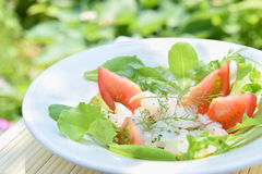 Carpaccio of fish with salad Stock Images