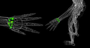 Carpal bones. 3d rendered illustration of the human carpal bones Stock Photo