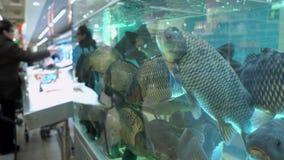 Carpas grandes en el acuario en mercado de pescados en el fondo de compradores almacen de metraje de vídeo