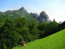 carpathian äng Arkivfoto