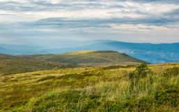 Carpathian alpine meadows in august. Lovely summer landscape on a cloudy day. yellow weathered grass royalty free stock images
