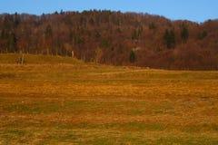 Carpathian berg övervintrar landskap med blå himmel, röda träd och moln, naturlig bakgrund Ukraina 2018 Arkivfoto