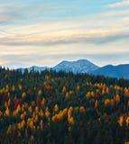 Carpathian berg för aftonhöst, Ukraina Royaltyfri Foto
