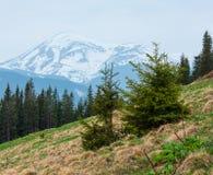 Carpathian berg för vår royaltyfria bilder