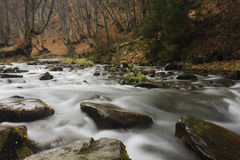 carpathian bergflod Arkivfoto