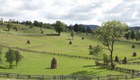 Carpathian bergliggande royaltyfri bild