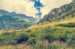 carpathian bergukraine dal Arkivfoto
