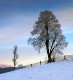 carpathian bergukraine dal Royaltyfria Bilder