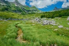 carpathian bergukraine dal Royaltyfri Bild