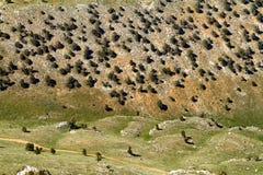 carpathian bergukraine dal royaltyfria foton