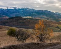 Carpathian countryside in november. Hills with weathered grass and distant mountain with snowy top on an overcast day royalty free stock image