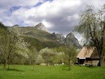 carpathian dzień wiosny Obrazy Stock