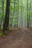 Carpathian foggy forrest Royalty Free Stock Photo