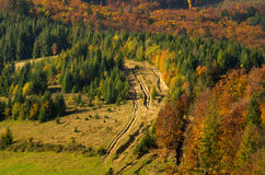 Carpathian forest in autumn. Stock Photo
