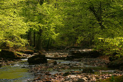 Carpathian forest river Stock Photo