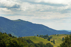 Carpathian forest. Sunny day in Ukraine Royalty Free Stock Image