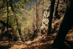 Carpathian forest in a surroundings of Dovbush trail mountain Stock Photo