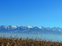 carpathian gór zima Fotografia Royalty Free