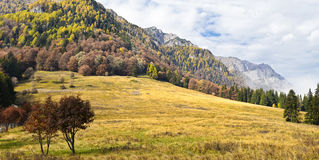 Carpathian Garden. A panoramic view of the wild forests that cover the Carpathian Mountains Royalty Free Stock Photos