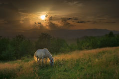 carpathian hästberg Royaltyfri Fotografi
