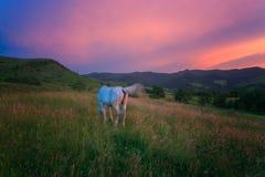 carpathian hästberg Arkivbilder