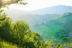 Carpathian highland. Trees on Carpathian highland meadow Royalty Free Stock Photography