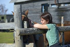 Carpathian horse Stock Image