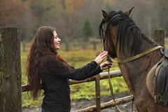 Carpathian horse Stock Photo