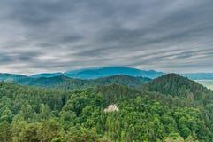Carpathian lös skog royaltyfri fotografi