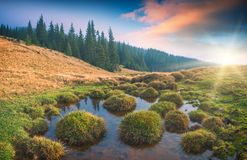 Carpathian lake Royalty Free Stock Photo