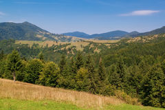 Carpathian landscape, forest firs. Royalty Free Stock Photo