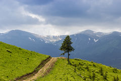 Carpathian landscape with a lone tree Royalty Free Stock Image