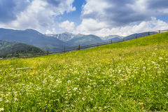 Carpathian landscape with with meadow Royalty Free Stock Photo