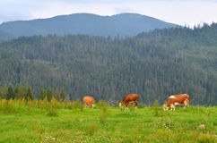 Carpathian landscape Royalty Free Stock Photo