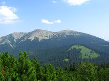 Carpathian landscape. In summer sunny day, Ukraine Stock Images