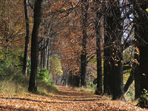 carpathian lasu. Fotografia Royalty Free