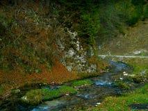 Carpathian mest forrest för bergflod Royaltyfri Foto