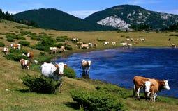 Carpathian moments Stock Images