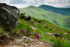 Carpathian montains view Stock Photography