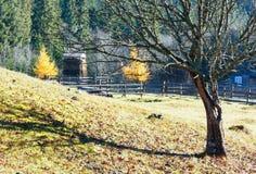 Carpathian mountain autumn country landscape. Royalty Free Stock Photo