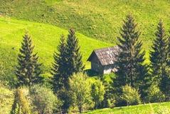 Carpathian mountain firs Royalty Free Stock Photos