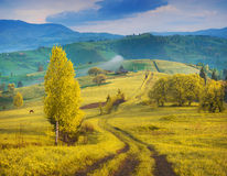 Carpathian mountain hills covered with yellow autumn grass Royalty Free Stock Photography